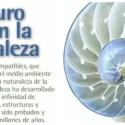 biomimesis - BIOMÍMESIS: el futuro está en la naturaleza