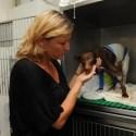 bly robert2 - CÁRCEL contra el maltrato animal