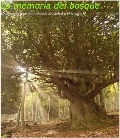 bosque1 - la memoria del bosque