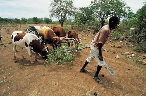 comprar tierras - Países ricos y multinacionales acaparan tierras en naciones hambrientas