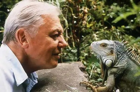 david attenborough mirando iguana - david-attenborough-