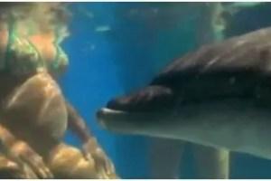 delfin1 - Parto en el agua con la ayuda de delfines: historia, beneficios y las investigaciones de Igor Tcharkowsky