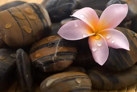 flor piedra - flor-piedra