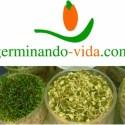 germinando - GERMINANDO-VIDA: el poder de los alimentos vivos. Entrevistamos a la experta Gae Arlia