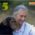jane goodball - JANE GOODALL, una vida a favor de los seres vivos