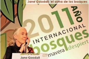 jane1 - Boletín del Instituto Jane Goodall en pdf, abril-junio 2011