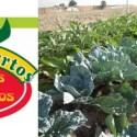 los huertos huertos ecologicos - Los Huertos: practica la agricultura ecológica en familia en parcelas de alquiler cerca de Madrid