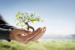 menos papel mas arboles - Menos papel, más árboles. Los viernes de Ecología Cotidiana