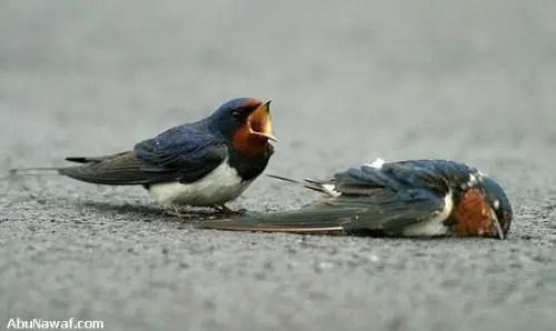 pajaro51 - amor y compasión entre pájaros