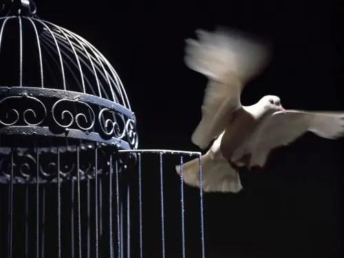paloma - paloma libertad