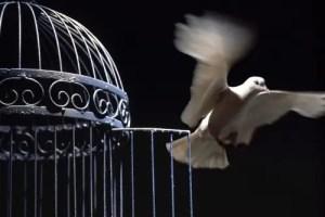 paloma - ¿QUÉ PASA SI...? 50 medidas de activismo social para el Cambio de Paradigma