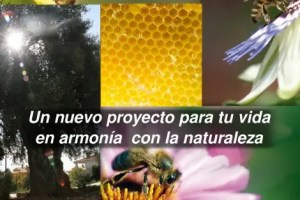 paraespania2 - permAPICULTURA: el arte de no hacer nada a las abejas