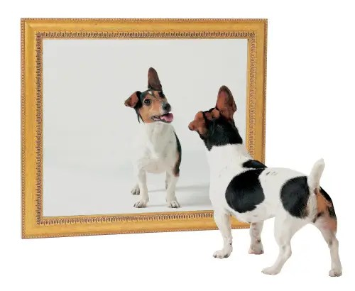 perro espejo1 - el reflejo de nuestros actos