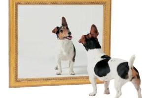 perro espejo1 - El reflejo de nuestros actos. Cuento de los perros y la casa