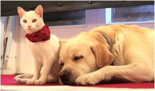 perro gato2 - perro-gato-paz