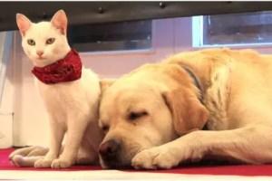 perro gato2 - La humanidad puede llevarse como el perro y el gato