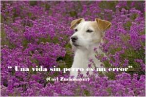 perros4 - Cuento sobre nuestra estima a los animales de Paulo Coelho: ¿Cielo o infierno?