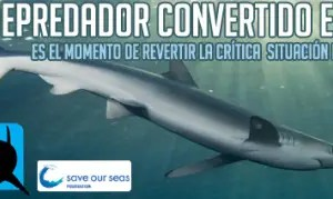 semana europea del tiburon 2009 - Semana Europea del Tiburón 2009: el depredador convertido en presa