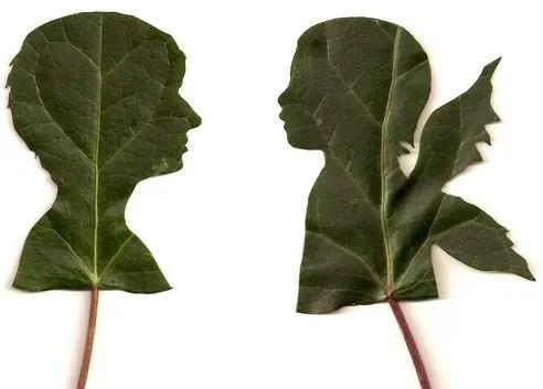 siluetas en hojas por jenny lee fowler - siluetas en hojas por Jenny Lee Fowler