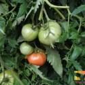 tomatehuertalogo - En mi nueva casa, un huerto de verano: neo-ruralismo (1/2)