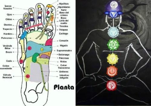 reflexologia holistica - reflexologia holistica