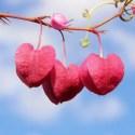 flores amor - Tiempo de amor