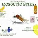 remedios caseros picaduras mosquitos - Para las picaduras de los mosquitos... remedios naturales. Los viernes de Ecología Cotidiana