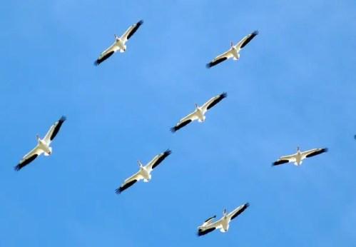 Familia aves - Familia aves