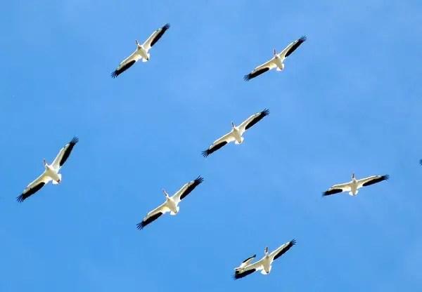 Familia aves