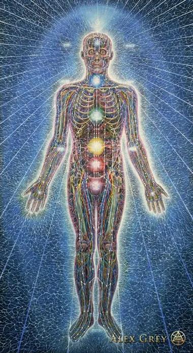 ANATOMÍA SUTIL del ser humano: glándulas, chakras y circuito ...