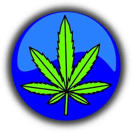 cannabis 490775 640 - Marihuana, usos y abuso