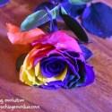 Florequinoccio - Despierta tu poeta interior, ejercicio de Equinoccio de Primavera