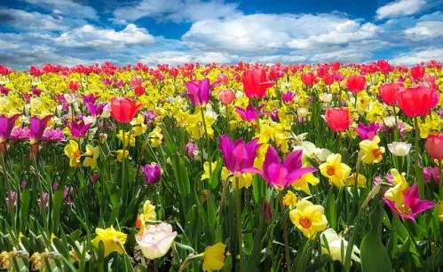 primavera - primavera