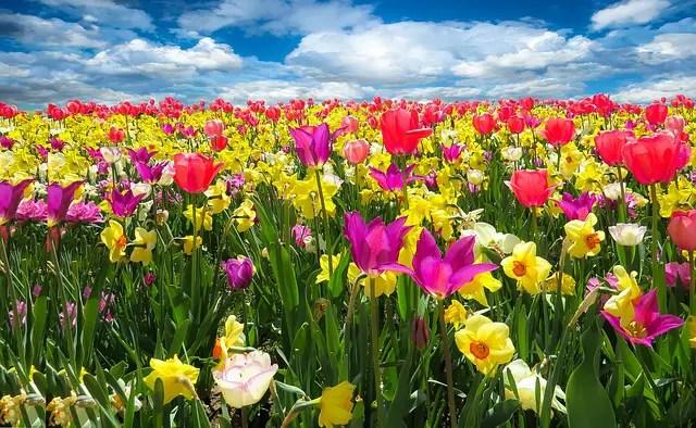 primavera - La primavera la alergia altera