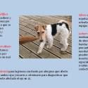 1 - En verano, mascotas sin alergias y de forma natural