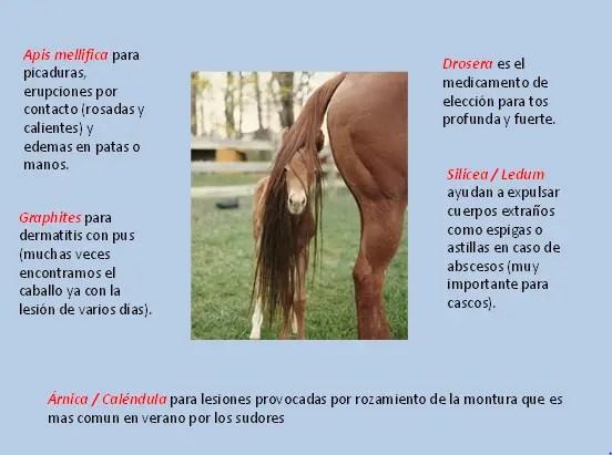 2 - En verano, mascotas sin alergias y de forma natural