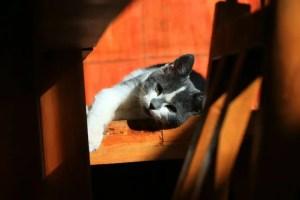 Mascotas felices y bien cuidadas1 - Mascotas felices y bien cuidadas