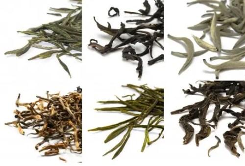 variedades de té - variedades de té