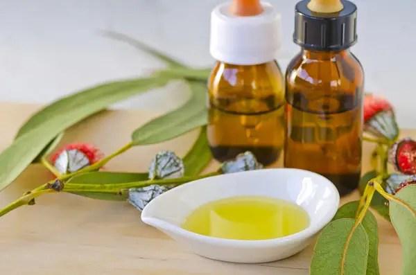 aceite esencial de eucalipto - Bosques de eucaliptos ¿beneficios o riesgos?