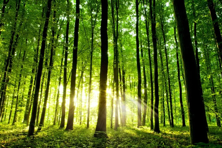 bosques - Gestión forestal, planificación racional para reducir incendios