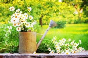 verano - Ideas ecológicas y sostenibles para el verano
