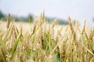 cosechas mas productivas - Cosechas más productivas de forma natural