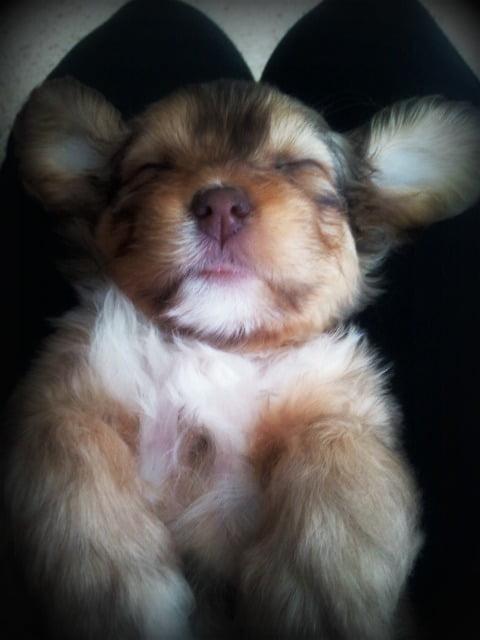 Uma duerme