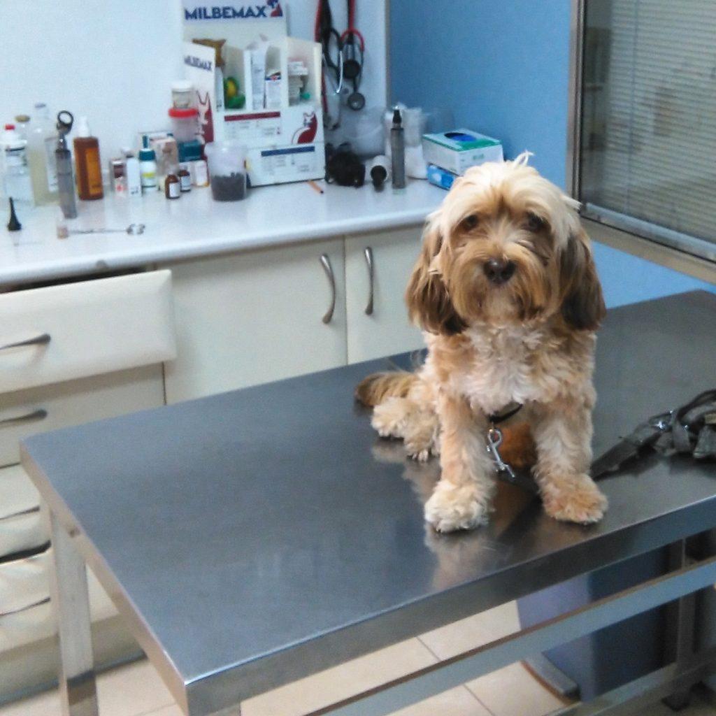 cartilla veterinaria perro
