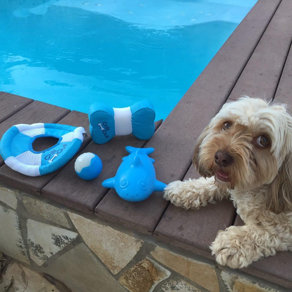 juguetes para agua para perro