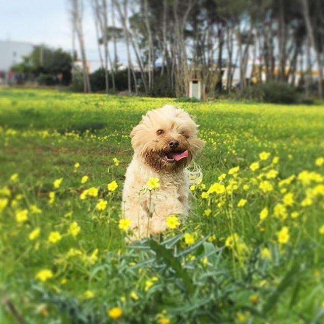 cómo hacer feliz a un perro