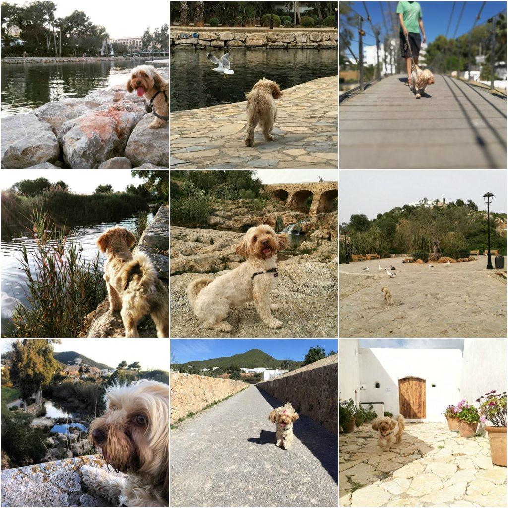 vacaciones con perro en santa eulalia del rio