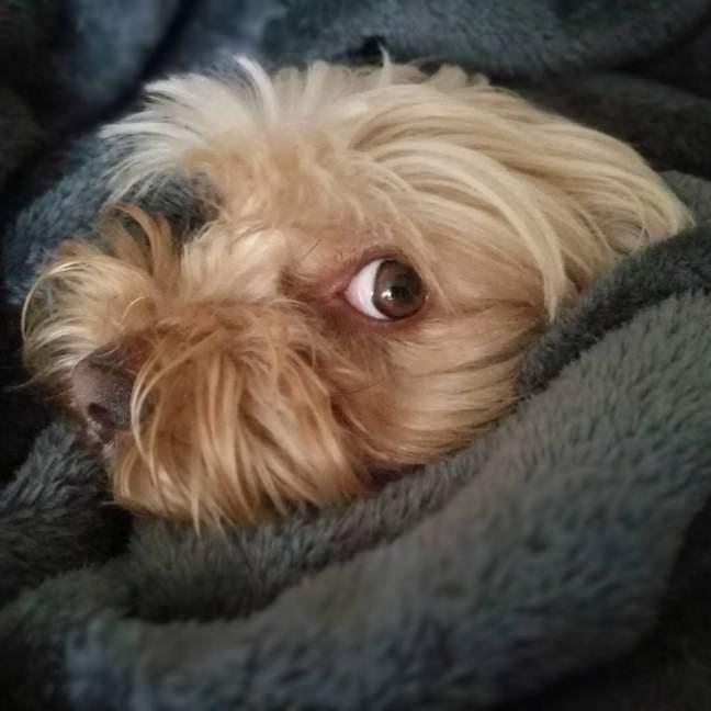 dormir con perro
