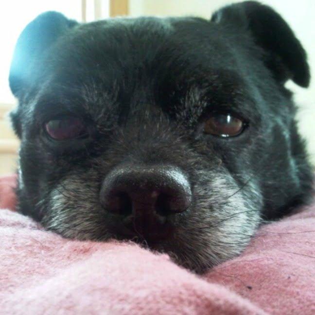 causas de cáncer en perros