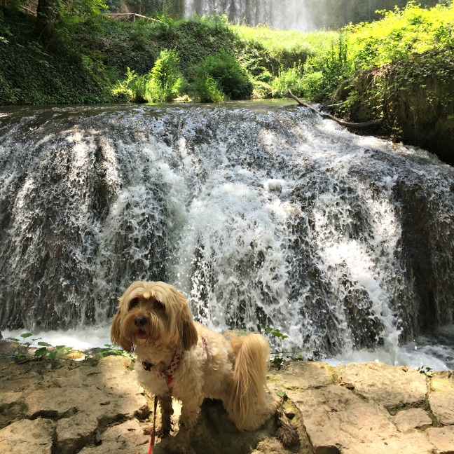 excursión con perro al Monasterio de Piedra